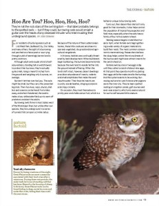 Burrowing Owls, Februrary 2011